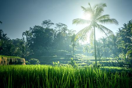 Tegalalang rice terrace, Bali, Indonesia Stockfoto