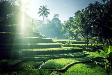Tegalalang rice terrace, Bali, Indonesia Stock Photo