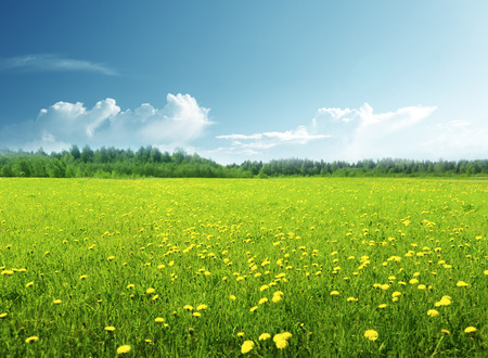 field of spring flowers and perfect sky Archivio Fotografico - 101370155