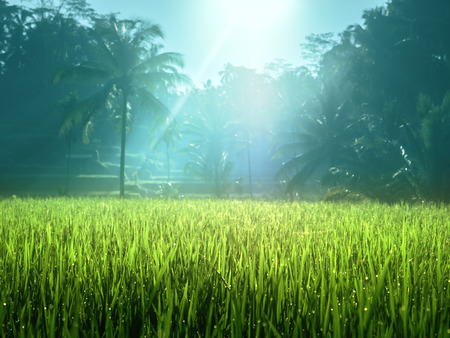 Tegalalang rice plantation terrace, Bali, Indonesia.
