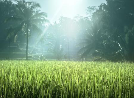 Tegalalang rice plantation terrace, Bali, Indonesia.  Stock Photo