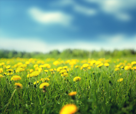 field of spring flowers and perfect sky Archivio Fotografico - 103437083