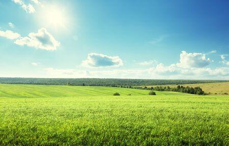 field of spring grass and perfect sky Archivio Fotografico