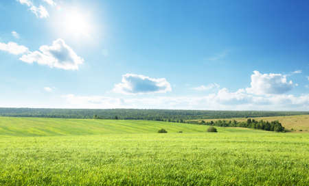 field of spring grass and perfect sky 写真素材 - 155556906
