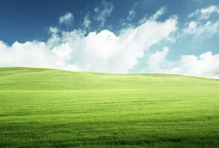 field of grass and perfect blue sky 写真素材