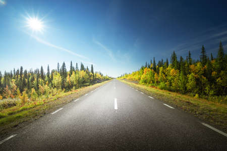 Road in autumn forest, Sweden Stockfoto