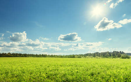 field of spring grass and perfect sky Reklamní fotografie