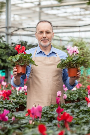 he old: Experienced old gardener is working at greenhouse. He is standing and holding two plants.