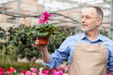 he old: Cheerful old gardener is working at greenhouse. He is standing and holding flowerpot. The man is looking at it with admiration. He is smiling