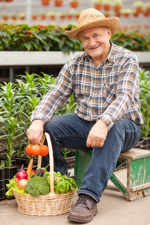 Cheerful old farmer is sitting in greenhouse near a basket of healthy vegetables. The man is holding tomato and smiling. He is looking forward with satisfaction