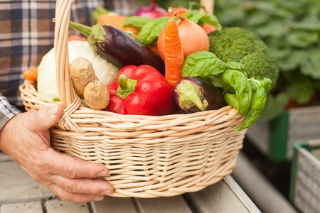 1 mature man: Close up of hands of old farmer holding a basket of vegetables. The man is standing in the garden
