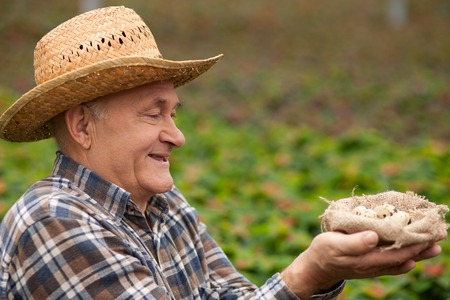 gentleness: Experienced senior farmer is carrying a nest of small quail eggs. He is looking at it with gentleness and smiling. The man is standing in the green meadow Stock Photo