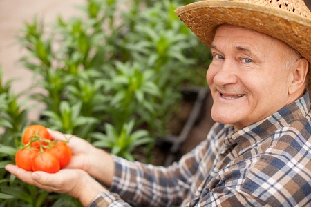 old man standing: Cheerful old farmer is holding tomato in his hands. He is looking at camera and smiling. The man is standing in a straw hat Stock Photo