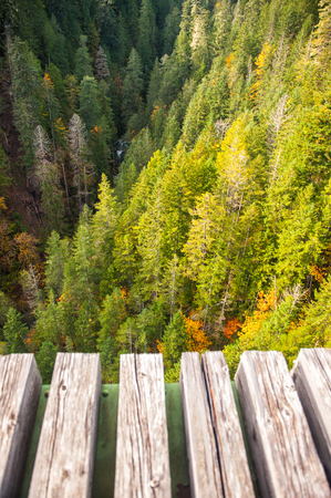 wood railroad: Marvelous autumn forest from wood railroad bridge in Washington