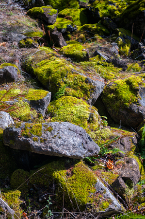 indigenous medicine: Close up of mountain rocks covered with green moss Stock Photo