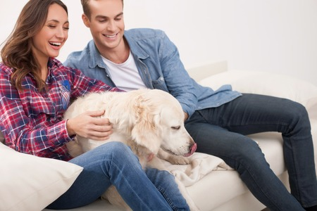 stroking: Attractive young man and woman are stroking dog with love. They are sitting on sofa and smiling