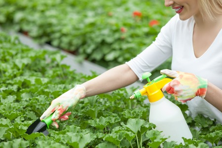 flower nursery: Cheerful female gardener is spraying water on green plants in flower nursery. She is holding a sprinkler and a tool. The woman is standing and smiling