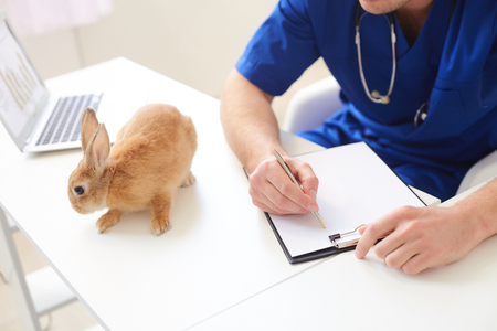animal health: Skillful young vet is examining health of animal. He is sitting at desk near a rabbit and making notes