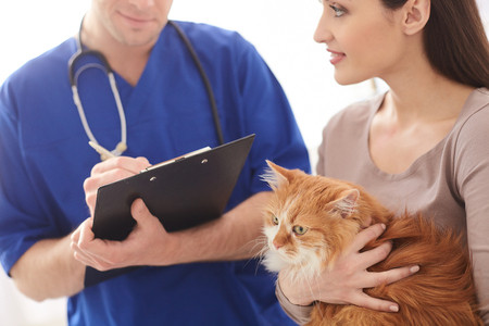 animal health: Experienced male vet is making notes about animal health with concentration. Beautiful woman is standing and holding a cat. She is smiling