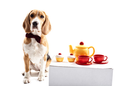 Pretty dog has tea party. He is standing near a table with cups, kettle and pies on it. Isolated