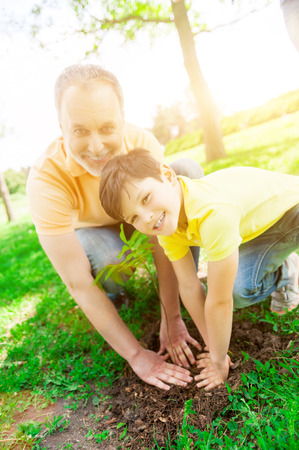 Cheerful grandfather and grandson are planting small tree together in park. They are pressing the ground near a sapling. Man and child are looking at camera and smiling
