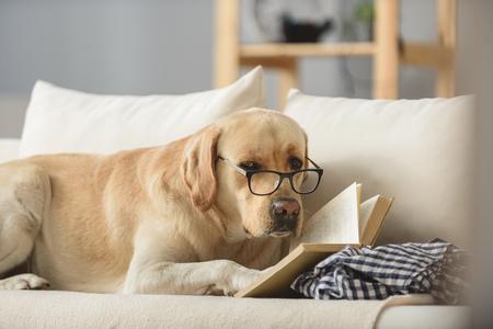slimme uitziende hond in glazen met boek op zoek naar een camera, examens concept Stockfoto