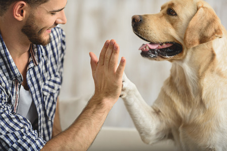 man holding dog's paw on a sofa, close up Stok Fotoğraf - 64895319
