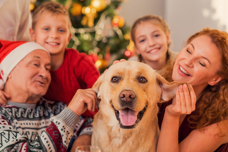 Friendly family is playing with dog near Christmas tree. They are sitting and laughing Stock Photo