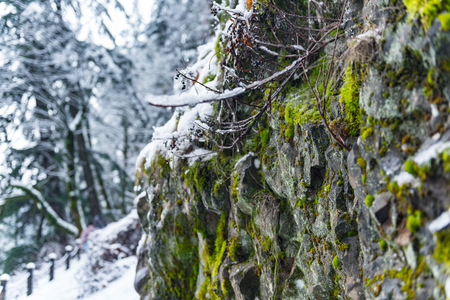 Stone fence with lichen in snowy park