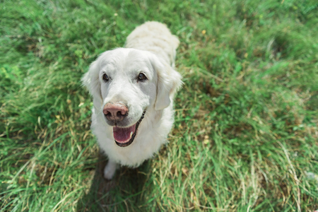Happy dog playing on meadow Stock Photo