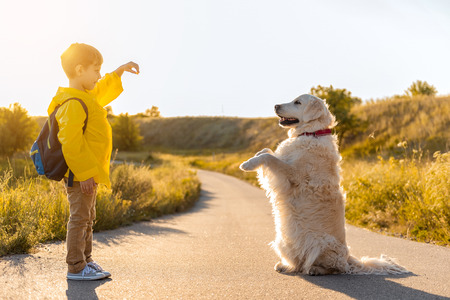 Joyful boy is training his Labrador dog road near grassland. The animal is standing on lower paws with cheerfulness Stock fotó