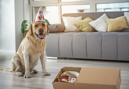 Happy dog celebrating birthday at home