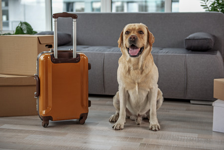 Cheerful dog locating near baggage at home