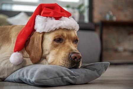 Calm dog resting on cushion