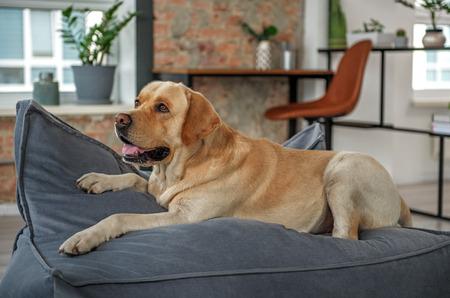 Nice dog lying on comfortable sofa