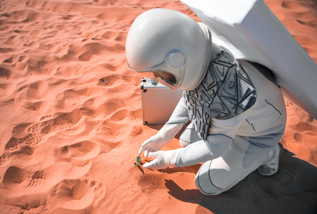 Astronaut wearing white helmet is squatting nearby plant, situated in desert and He going to touch it. Top view. Copy space on left side Stock fotó