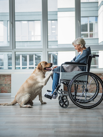 Pleased senior woman looking at the hound and holding the paw of it. She is sitting in wheelchair covered in a blanket. Hound is putting paw on the knee of woman