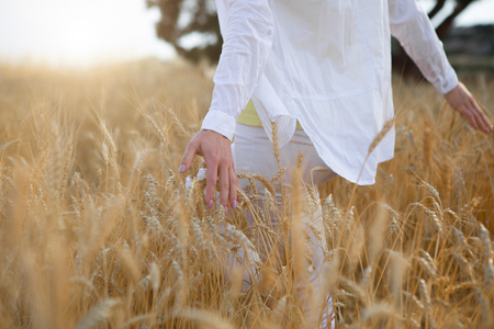 Close up of young woman arms feeling ears of wheat with pleasure. Relaxation in the nature concept