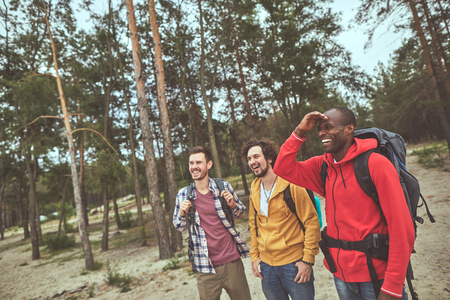 Arriving to camp. Positive guys standing in woods and looking up for their holiday campground Stock Photo