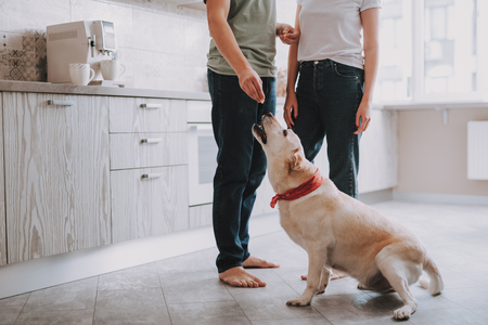 Two people in casual style feeding their hungry dog while standing in bright kitchen at home