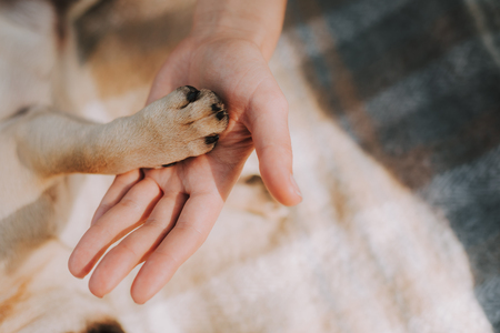 Top view of little soft paw of dog in arm of his female owner while staying on plaid