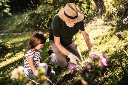 Elderly man with his granddaughter planting new flowers on flowering bed 写真素材