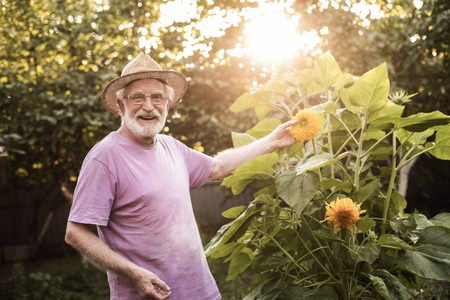 Waist up of elderly male in hat standing in yard and touching flower by hand