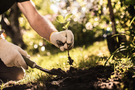 Side view of gardener hands holding sprout and garden showel while digging new plant in soil