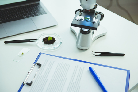 Workplace with microscope and green sprout on petri dish