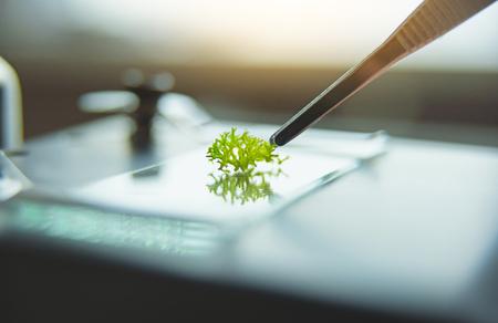 Primo piano di pinzette con pianta verde su vetrino per microscopio su sfondo sfocato