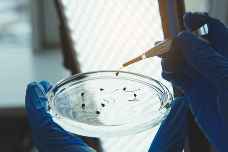 Scientist holding sprout with tweezers in laboratory room Stock Photo