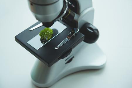 Test plant sample on microscope slide isolated on white background Stock Photo