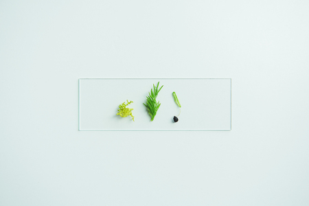 Glass slide with different plant samples isolated on white background