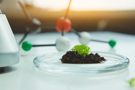 Close up of herb planted in ground on petri dish in laboratory